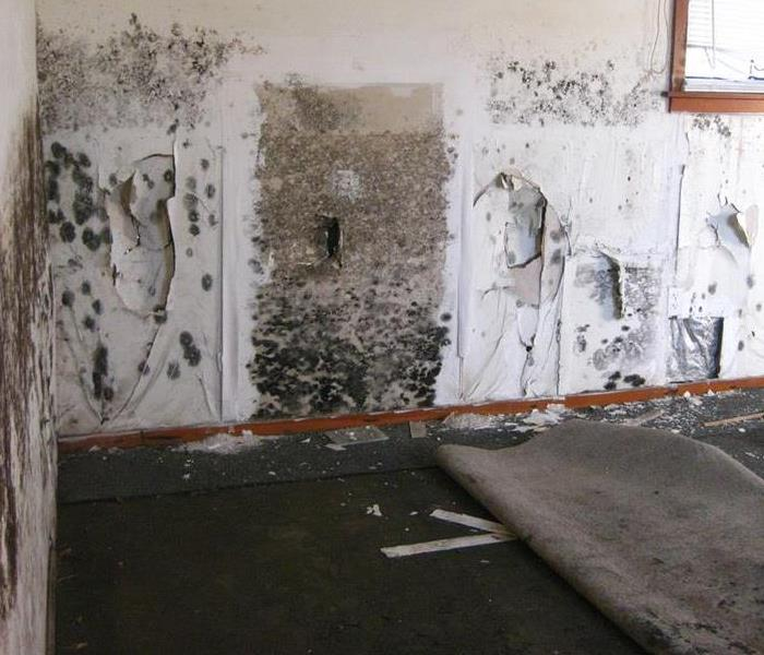 Mold Remediation The Cost of Black Mold Removal: Should I Buy A Home With Mold?